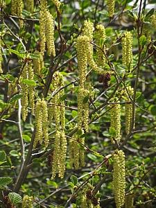 Our Plants | California Flora Nursery